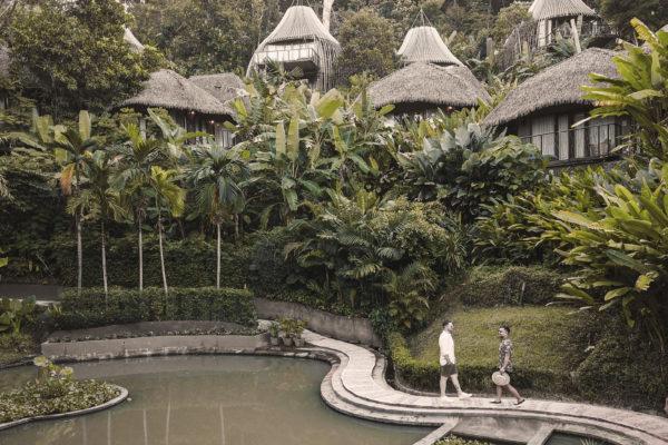 Enchanting Jungle Oasis
